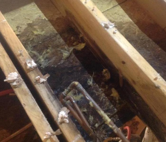 Mold and Rotting Subfloor
