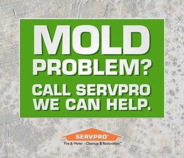 Mold Remediation Does Your Madison County Home Have A Mold Problem?