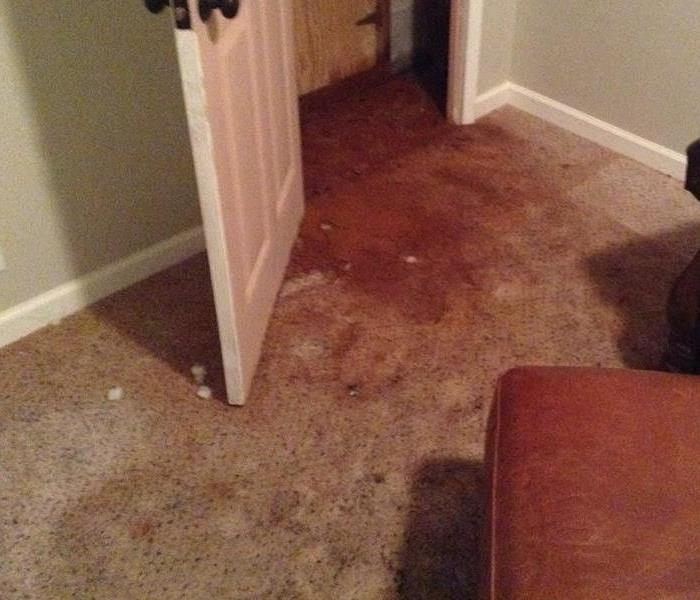 Water Damage The Need for Professional Cleanup After Water Damage